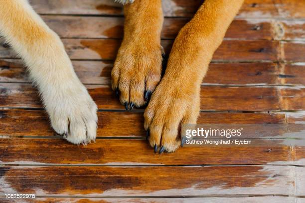 close-up of dog paws on wooden floor - paw stock pictures, royalty-free photos & images