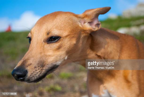 close-up of dog - barrie stock pictures, royalty-free photos & images