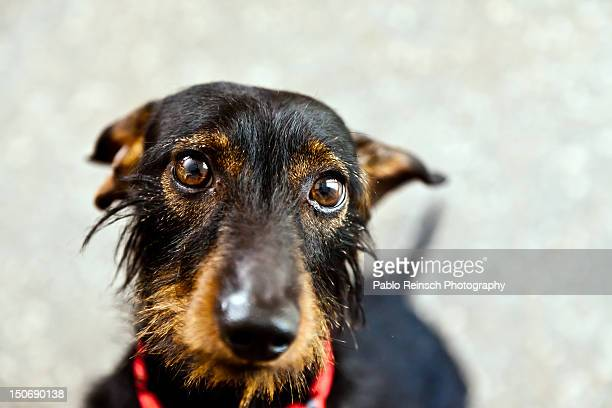 close-up of dog - posadas stock pictures, royalty-free photos & images