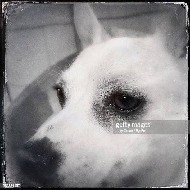 close-up of dog - transferbild stock-fotos und bilder