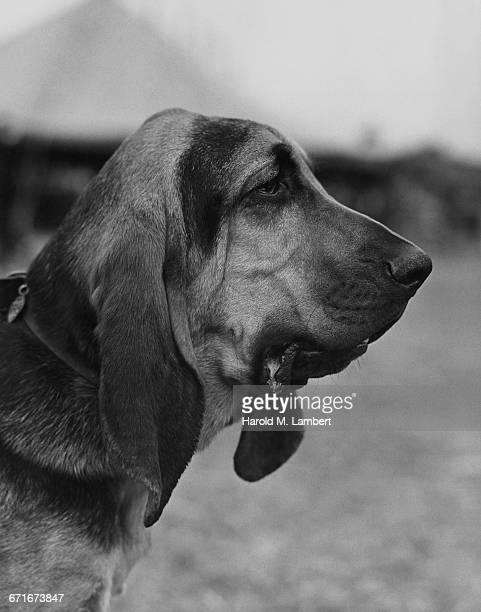 close-up of dog  - mamífero con garras fotografías e imágenes de stock