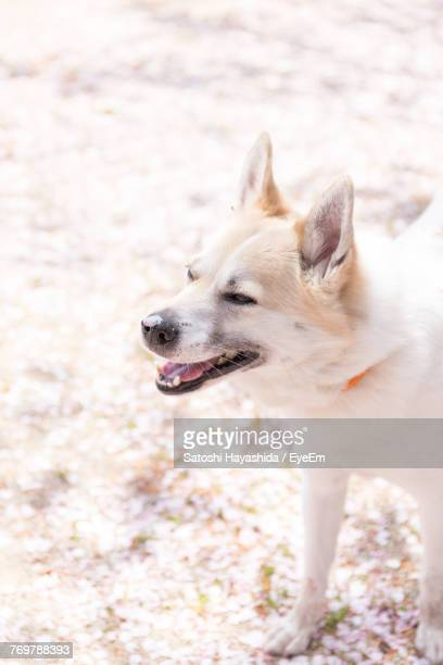 close-up of dog - ureshino saga stock pictures, royalty-free photos & images