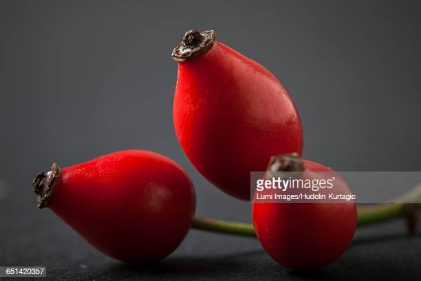 Close-up of  dog rose fruits
