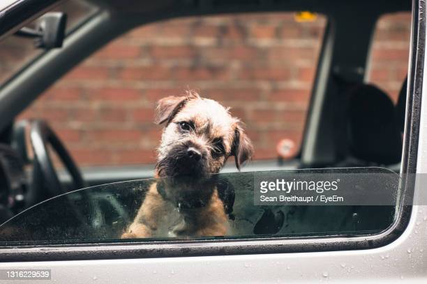 close-up of dog seen through glass window of a car - window stock pictures, royalty-free photos & images