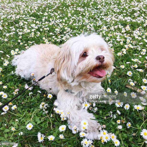 Close-Up Of Dog Sitting Amidst Flowering Plants On Field
