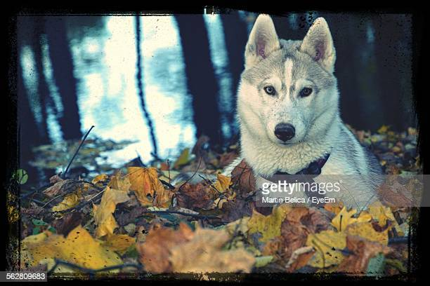 close-up of dog sitting in forest - ostrava stock pictures, royalty-free photos & images