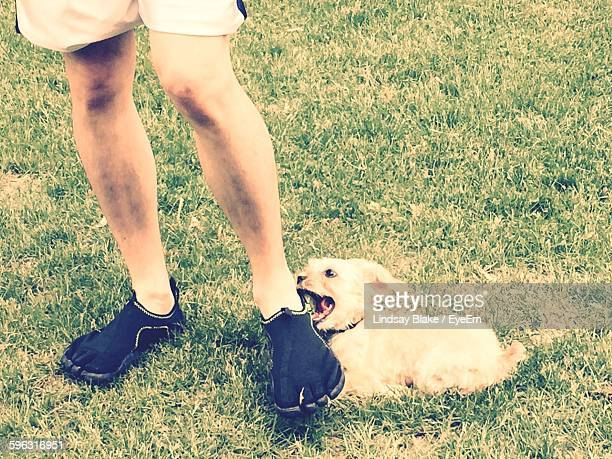 Close-Up Of Dog Sitting In Grass And Biting Man Foot