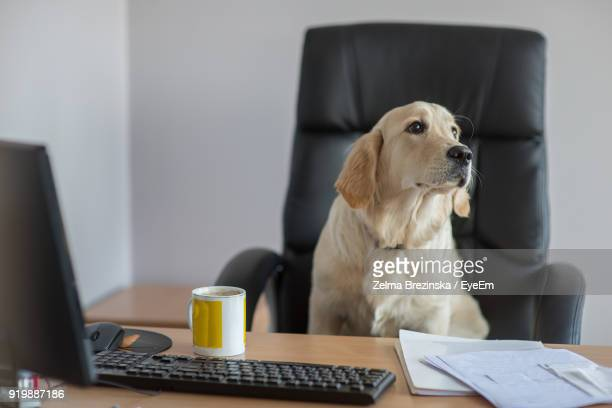 Close-Up Of Dog Sitting On Chair At Desk In Office