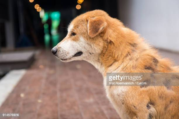 Close-Up Of Dog Sitting On Footpath