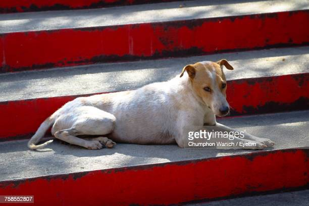 Close-Up Of Dog Sitting On Steps