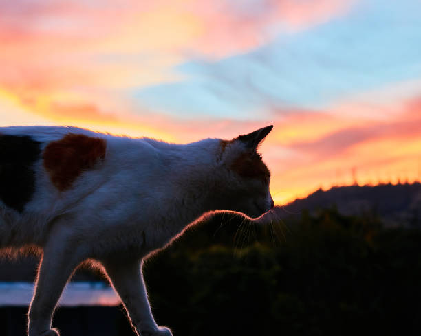 Close-up of dog standing against sky during sunset,Talca,Maule,Chile