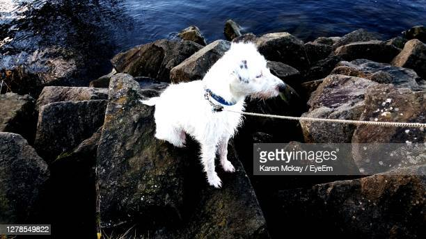 close-up of dog standing on rock by sea - karen mckay stock pictures, royalty-free photos & images