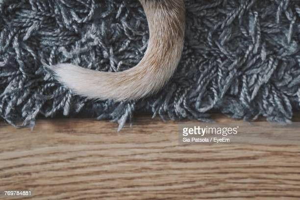 Close-Up Of Dog Tail On Rug
