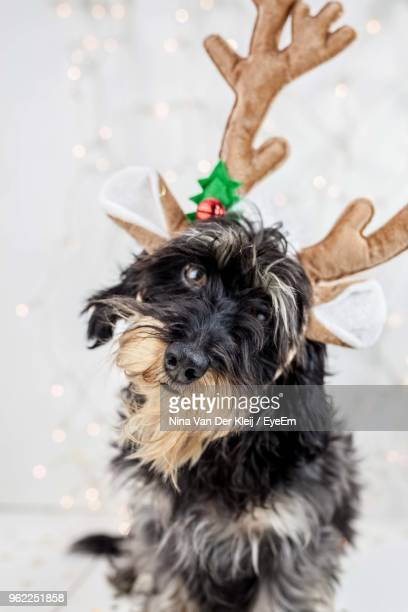 Close-Up Of Dog Wearing Antler Against White Background