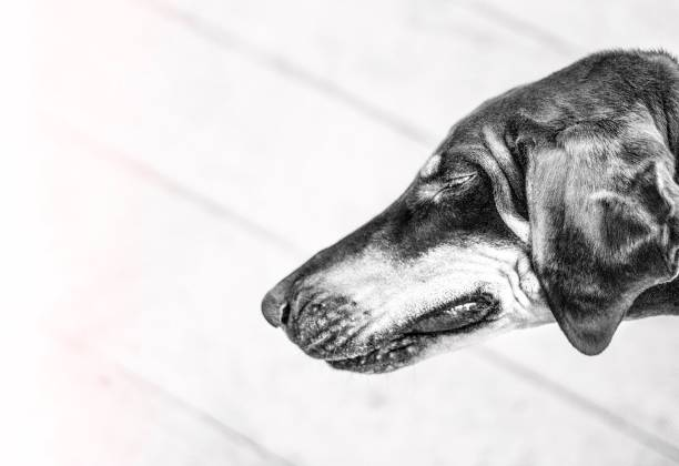 Close-Up Of Dog With Eyes Closed