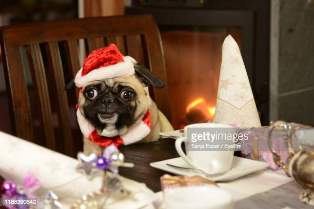 close-up of dog with illuminated christmas lights on table - santa close up stock pictures, royalty-free photos & images