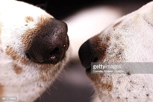 Close-Up Of Dogs Noses