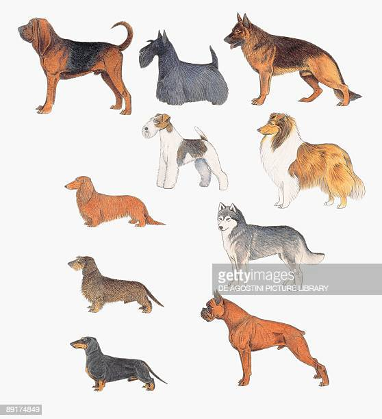 Closeup of dogs of various breeds