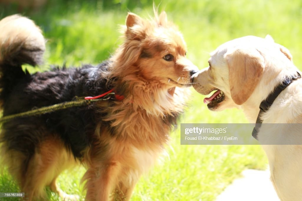 Close-Up Of Dogs On Grass : Stock Photo