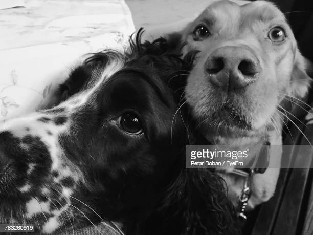 close-up of dogs - boban stock pictures, royalty-free photos & images