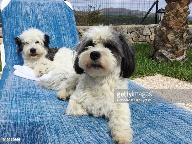 Close-Up Of Dogs Sitting On Lounge Chair