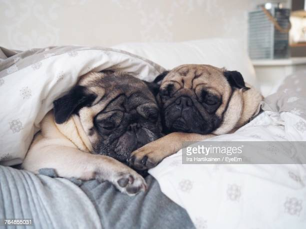 Close-Up Of Dogs Sleeping On Bed At Home