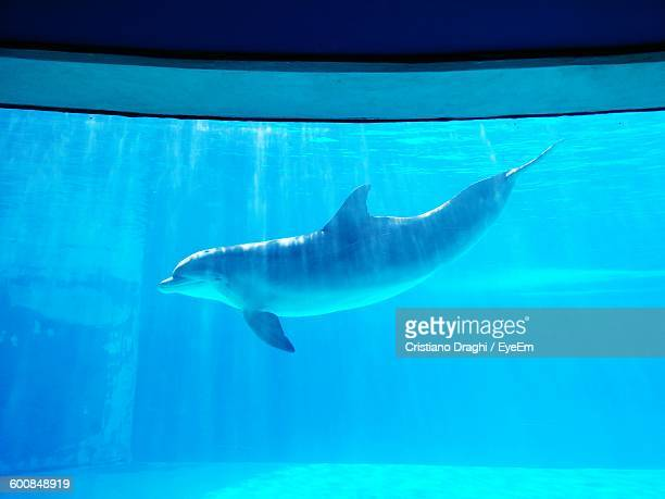close-up of dolphin swimming in aquarium - trapped stock pictures, royalty-free photos & images
