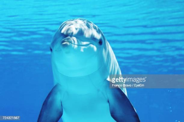 close-up of dolphin swimming underwater - dauphin photos et images de collection
