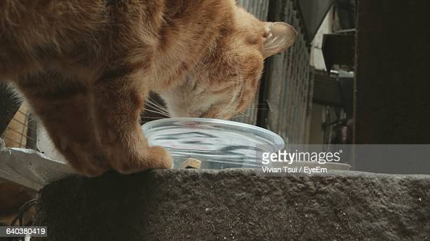 Close-Up Of Domestic Cat Eating From Bowl