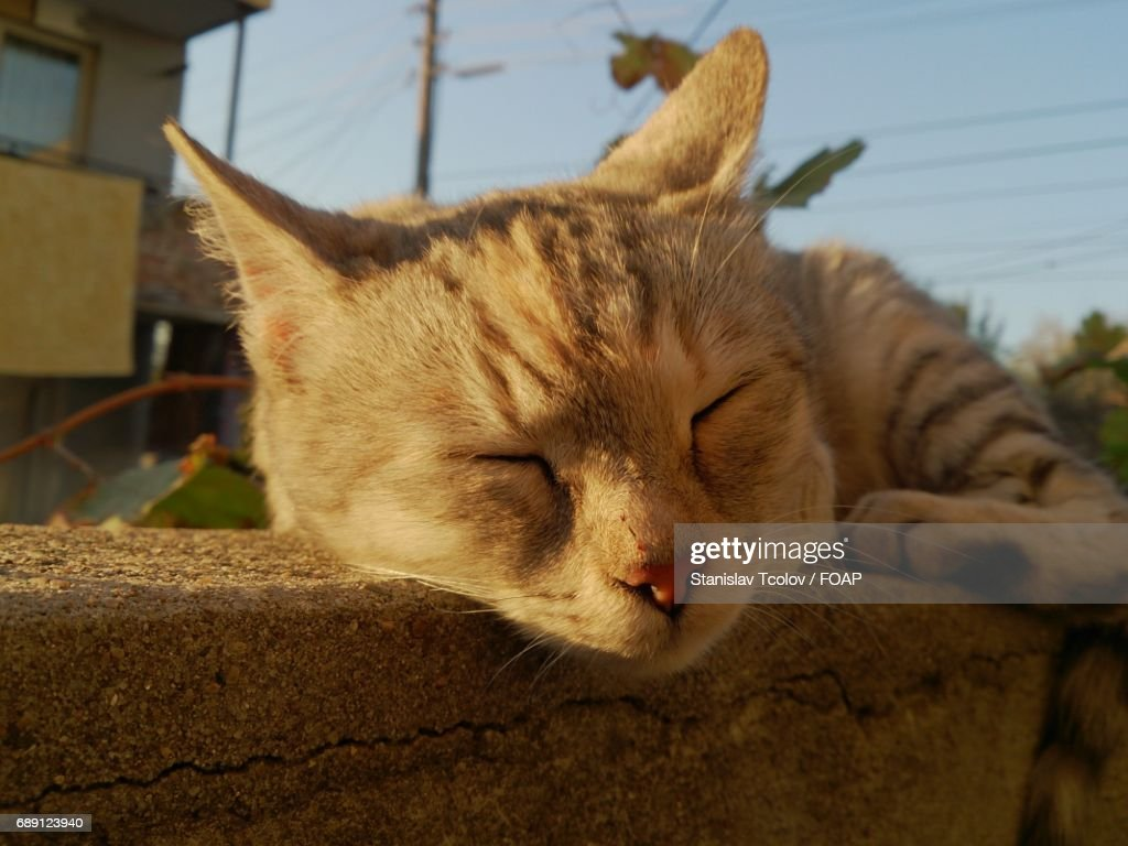 Close-up of domestic cat : Stock Photo