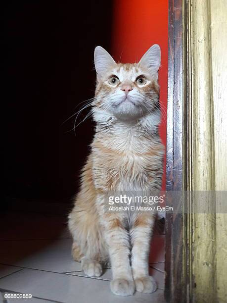 Close-Up Of Domestic Cat Sitting At Doorway