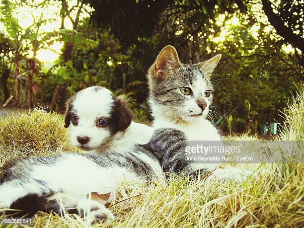 Close-Up Of Domestic Cat With Puppy Lying On Grassy Field