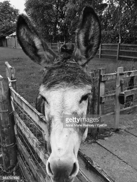 Close-Up Of Donkey By Fence