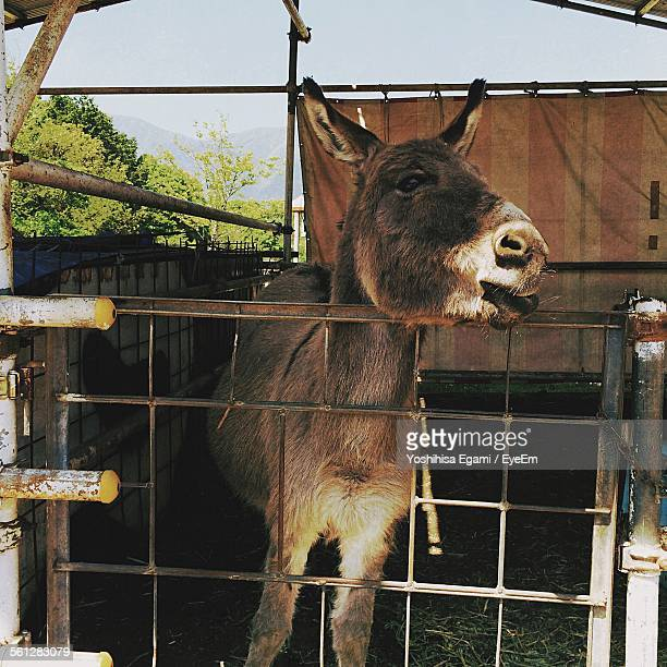 Close-Up Of Donkey In Cage