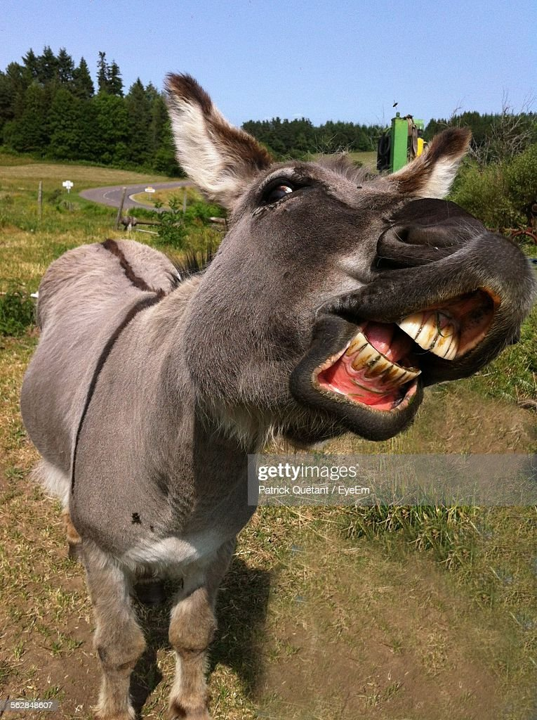 funny donkey stock photos and pictures getty images