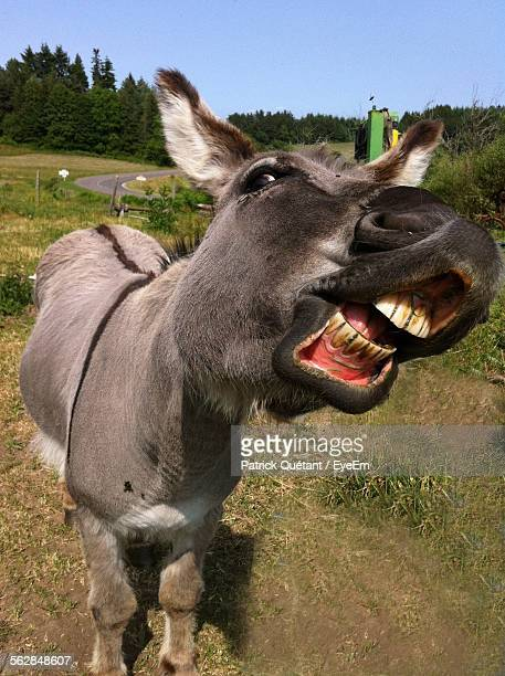 close-up of donkey on field against sky - esel stock-fotos und bilder
