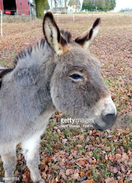 Close-Up Of Donkey On Field During Autumn