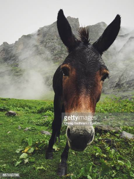 Close-Up Of Donkey Standing On Field Against Sky