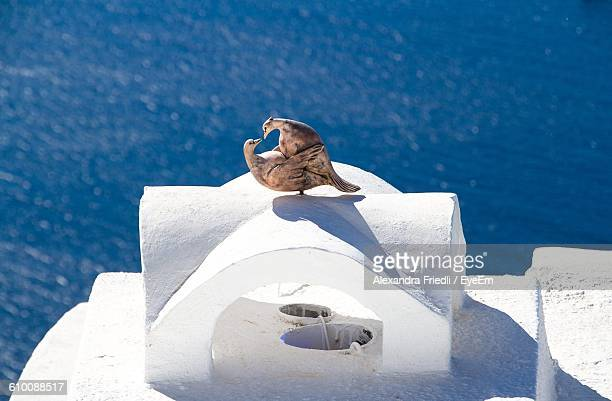 Close-Up Of Dove Statue On Retaining Wall Against Sea At Santorini