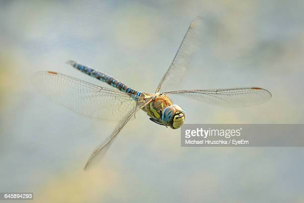 Close-Up Of Dragonfly Flying Outdoors