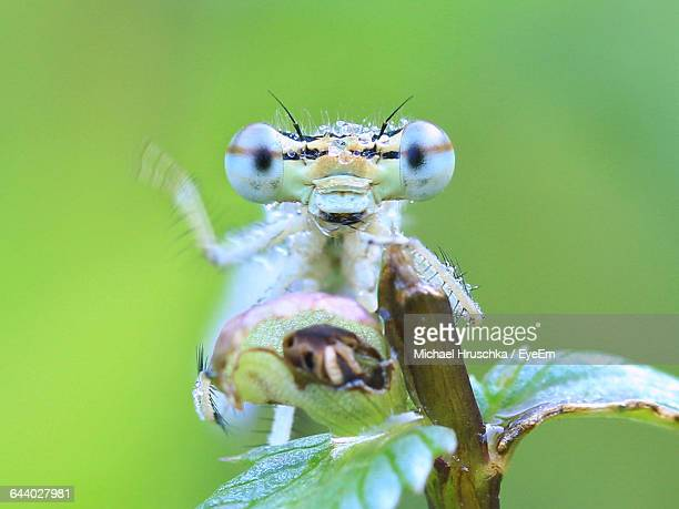 close-up of dragonfly looking at camera - michael hruschka stock pictures, royalty-free photos & images
