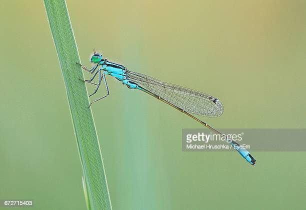 close-up of dragonfly on leaf against blurred background - michael hruschka stock pictures, royalty-free photos & images