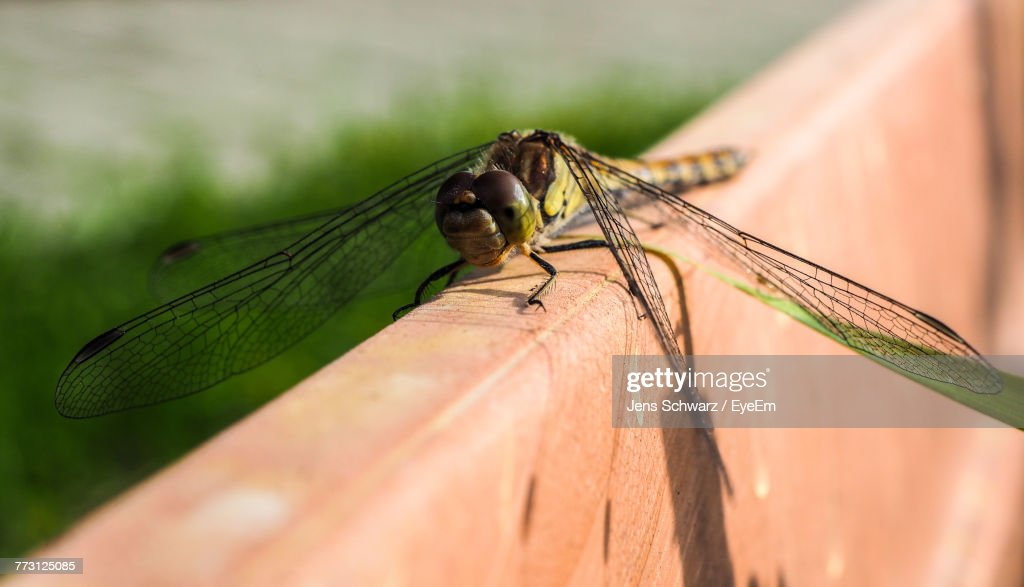 Close-Up Of Dragonfly On Metal : Photo