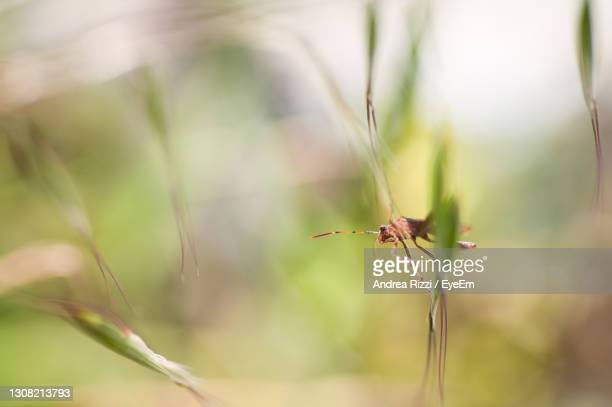 close-up of dragonfly on plant - andrea rizzi stock-fotos und bilder