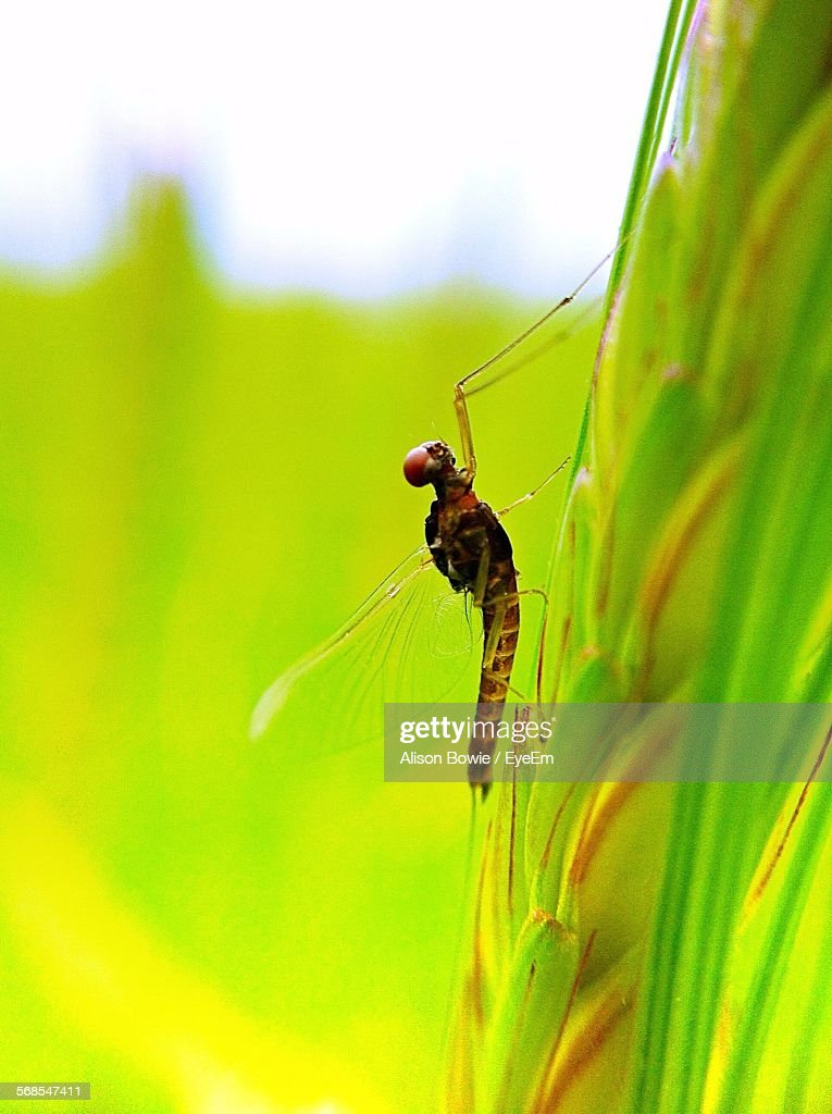 Close-Up Of Dragonfly On Plant : Foto de stock