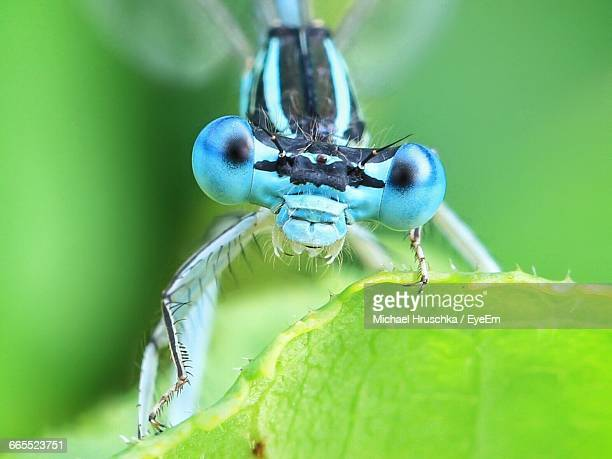 close-up of dragonfly on plant - michael hruschka stock pictures, royalty-free photos & images