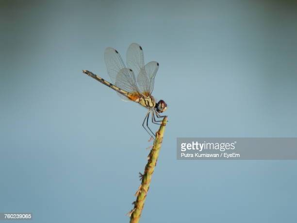 close-up of dragonfly on plant - dragonfly stock-fotos und bilder
