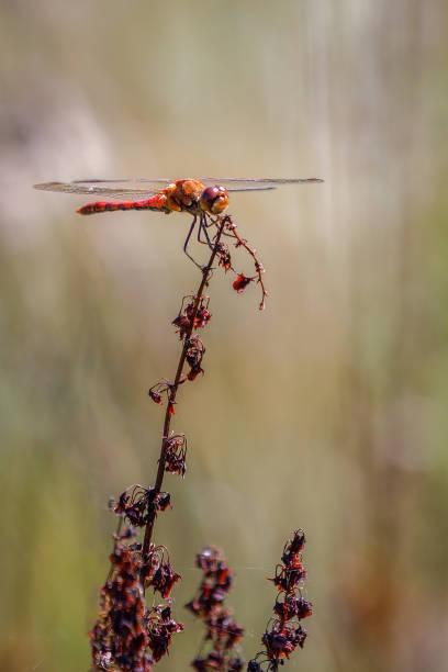 Close-up of dragonfly on plant,United Kingdom,UK
