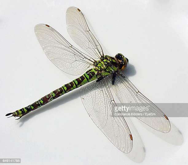 Close-Up Of Dragonfly On White Background