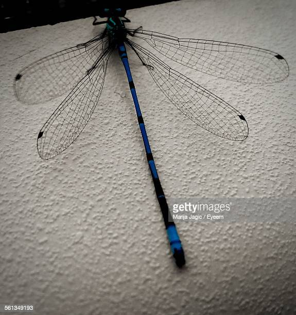 close-up of dragonfly perching on wall - marija mauer stock-fotos und bilder